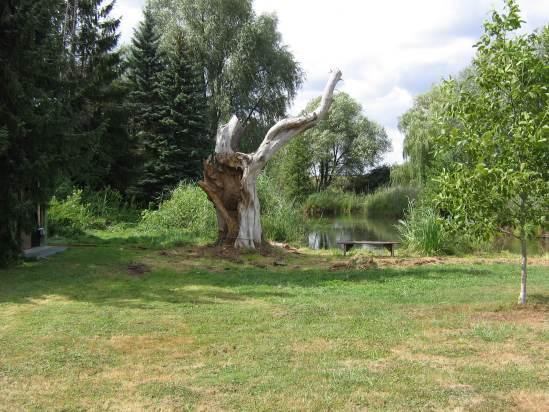 arbre_sorciere